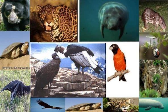 animales en extincion venezuela