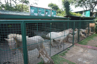 Zoori Zoo in Tagaytay