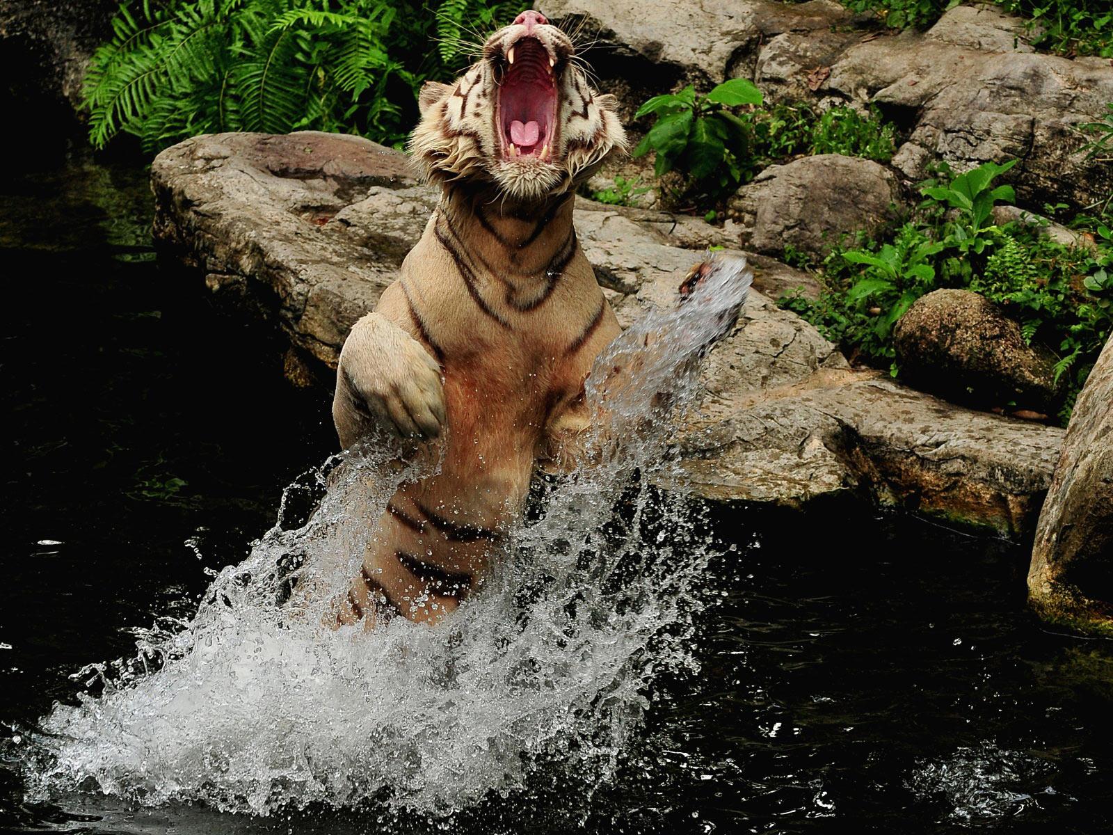 ANIMALS PLANET: Wild animals photo