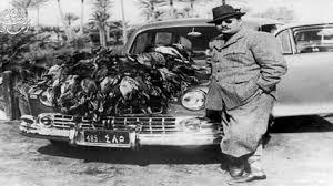 صيد البط بالفيوم