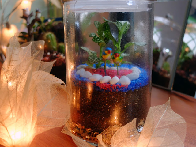 Where to get terrariums in Singapore
