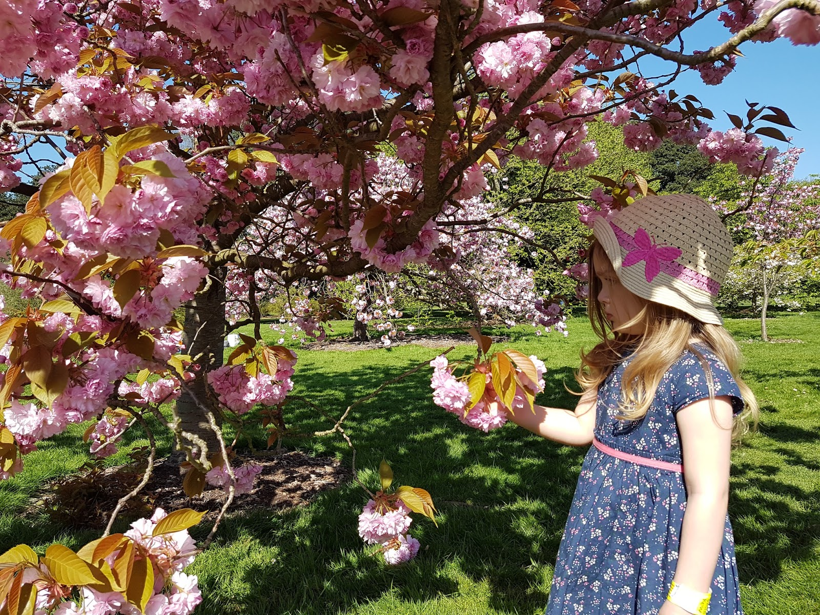 Kew Gardens with kids - little girl looking at pink flowers