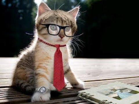 fotos de gatos con gafas de sol