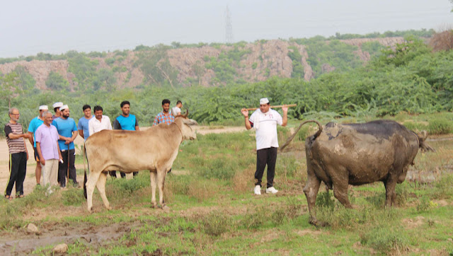 Neither the lake-filled government nor the buffalo grasslands: to promote the Dharmabhir