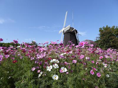 花博記念公園鶴見緑地 風車とコスモス
