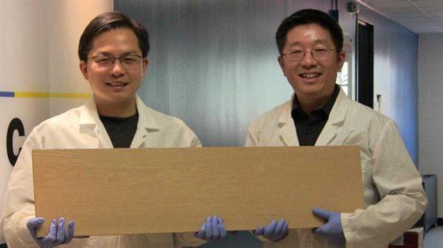 Επιστήμονες δημιούργησαν λεπτά φύλλα ξύλου που είναι πιο ανθεκτικά από πολλά κράματα μετάλλων