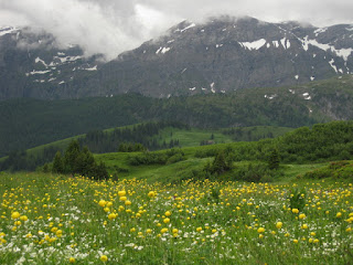 White and yellow wildflowers in a meadow along the AlpRundweg Leiterli trail, with snow-streaked mountains, Lenk, Switzerland