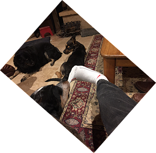 Brody tugs my sock while the other dogs look on.