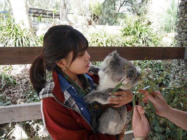 Akhirnya bisa meluk koala!