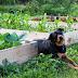 Φιλικοί για το σκύλο κήποι!...