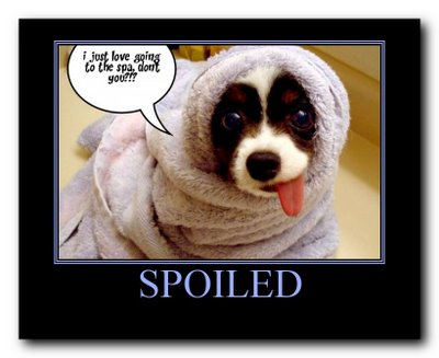 Funny animal pictures with words images magazine - Funny animal pictures with words ...