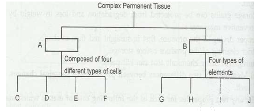 School notes: Science Class 9 Sample Paper Solve 2016