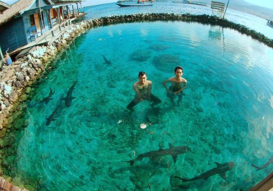 foto berenang bersama hiu, foto hiu di karimun jawa, pulau karimun jawa