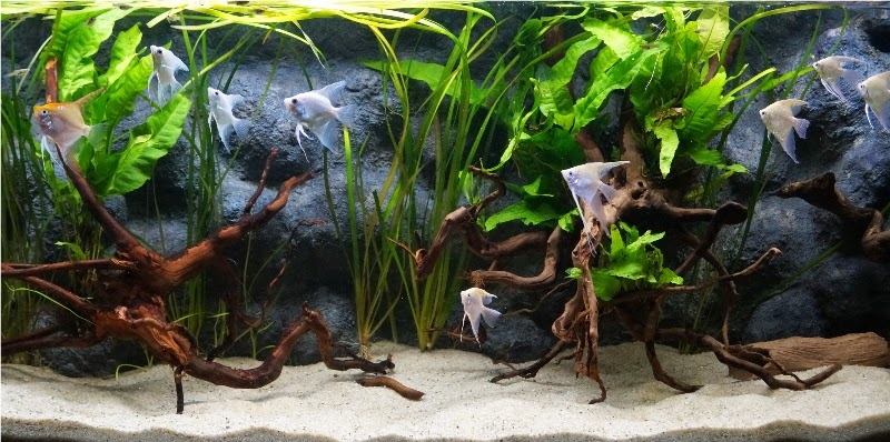 Aquarium Fish Forum Everything Aquatic Diy Styrofoam