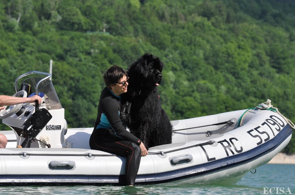 nos chiens sauveteurs aquatiques  u00e0 vouglans