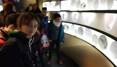 Oleoturismo Museo Activo del Aceite y la Sostenibilidad Terra Oleum