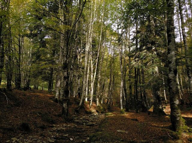 Los árboles en otoño le dan un color especial al bosque, en ocre, rojos y amarillos