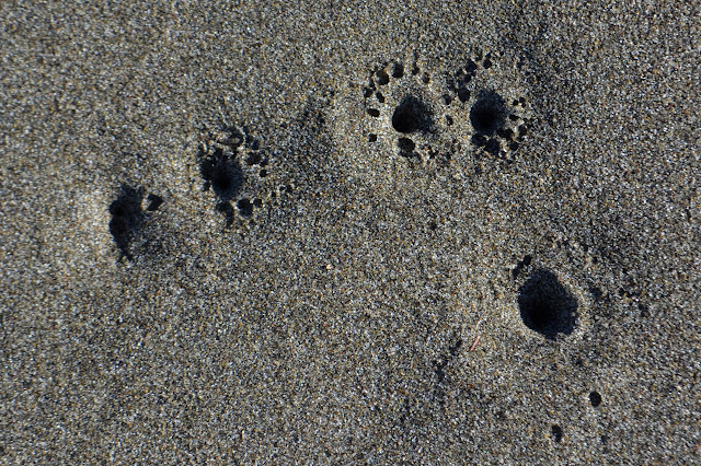 holes in the sand surrounded by smaller holes