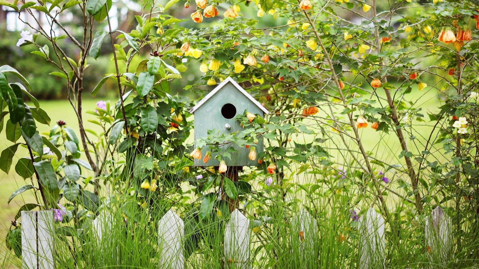 My Secret Garden: Nazura Gulfira: My Secret Garden
