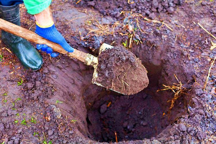 Yaşanan bahtsız kayıplar, vazonun uğursuz olduğu fikrine sebep oldu ve vazo uzak bir yere gömüldü.