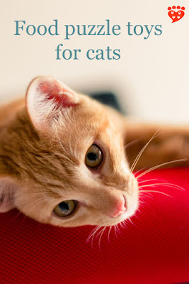 A ginger kitty on a red carpet dreams of food puzzle toys