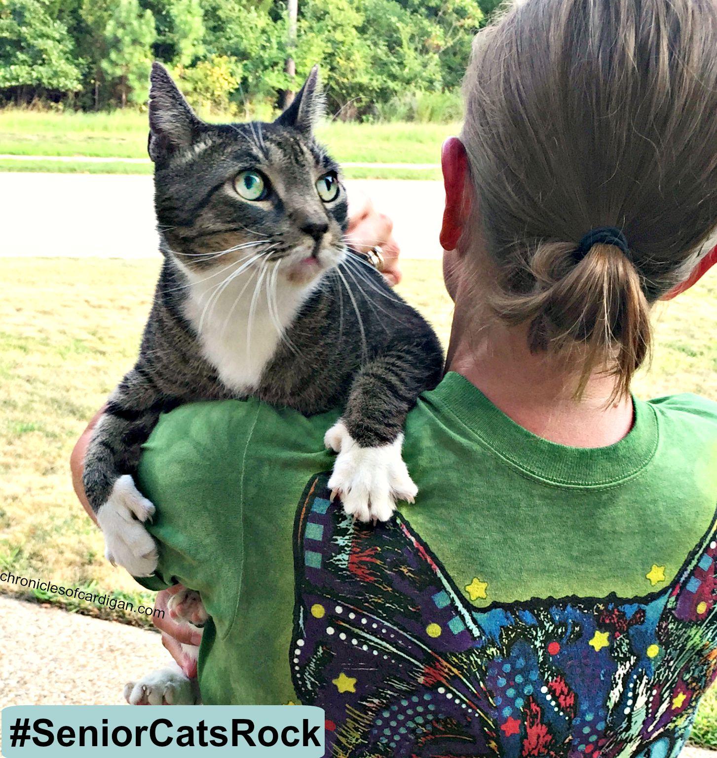 Karma Cat Rescue Fredericton