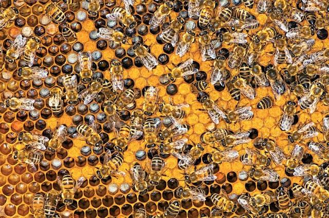 7 βήματα για να γίνεις μελισσοκόμος