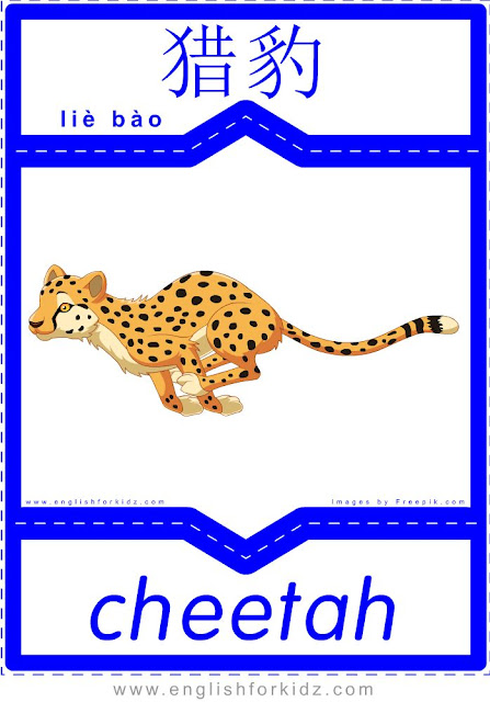 Cheetah - English-Chinese flashcards for wild animals topic