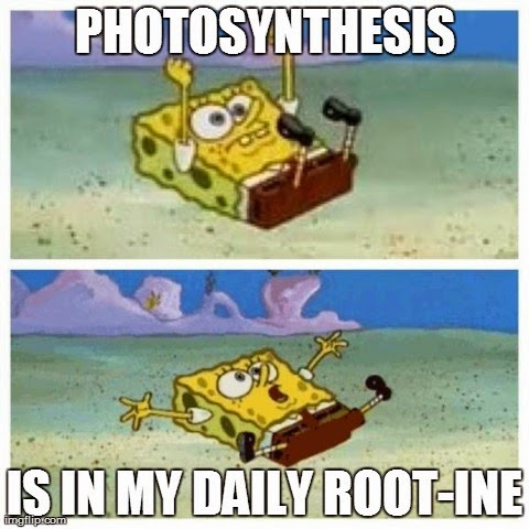 Spongebob's photosynthesis skills are astonishing.