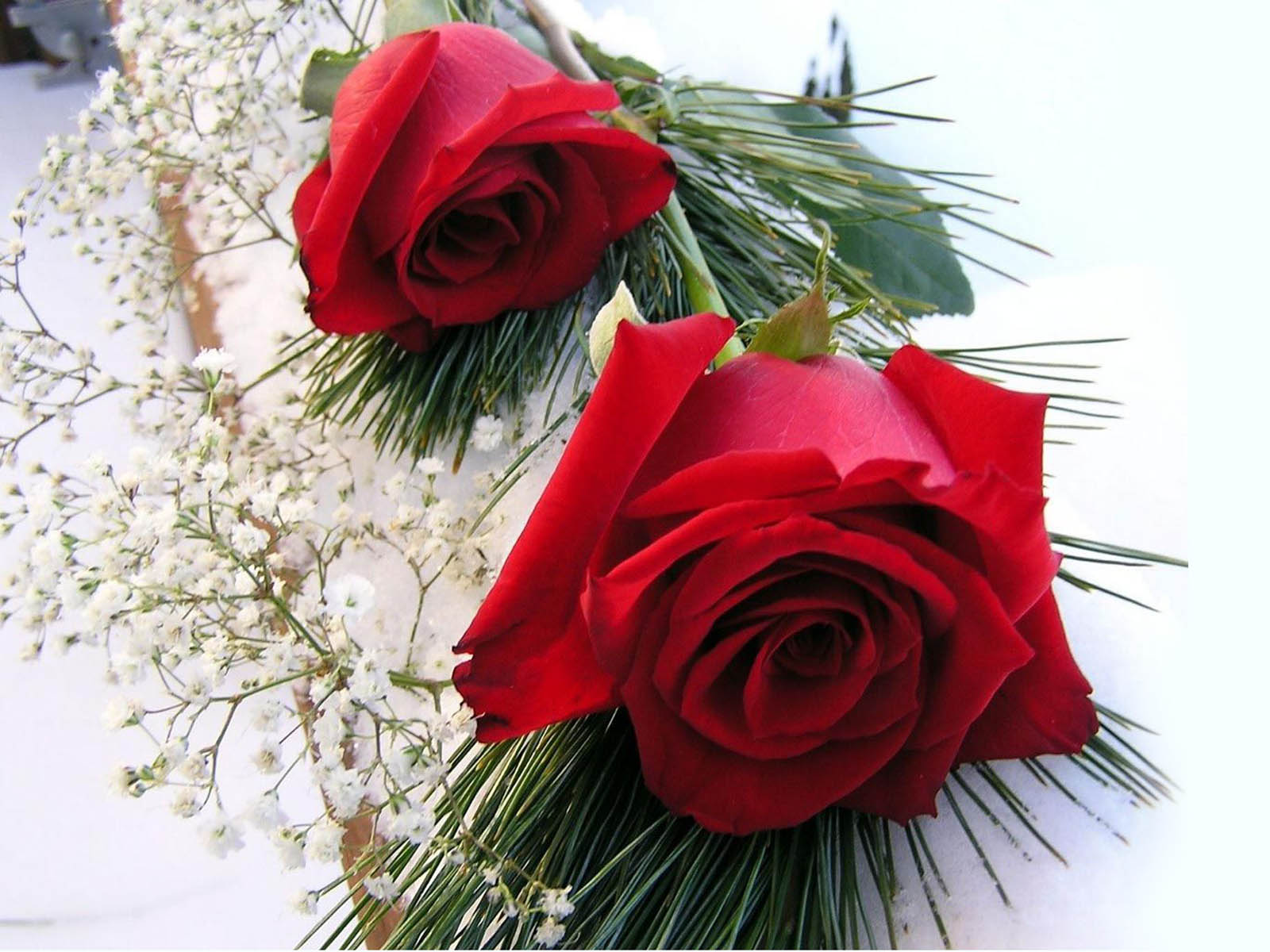 red roses wallpapers - photo #10