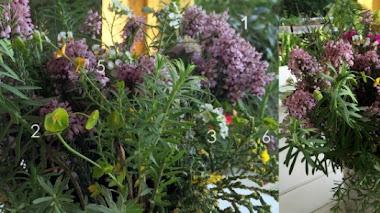 Plantas silvestres en el jarrón
