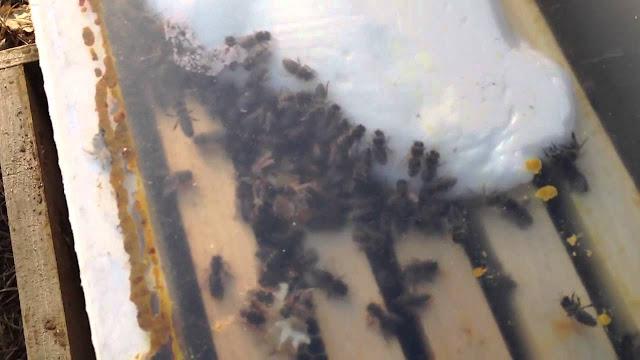 Μελισσοτροφές με ανεβασμένη HMF: Τι συμβαίνει τελικά; Τι να πράξει ο μελισσοκόμος;