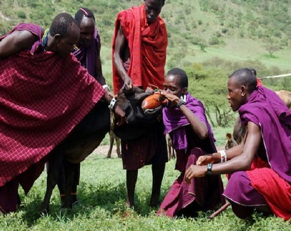 Suku Maasai (Foto: Wittyfeed)