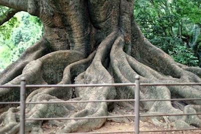 Bengaluru, Trees
