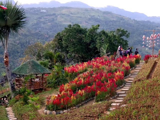 Sirao Flower Garden Cebu