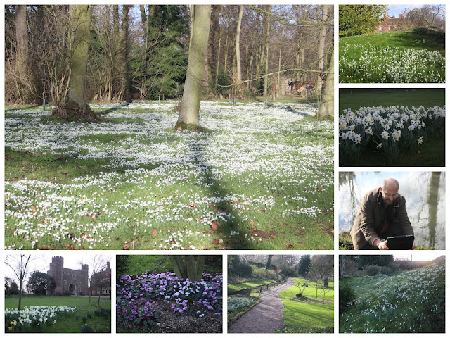 Snowdrops and other winter garden delights at Hodsock Priory