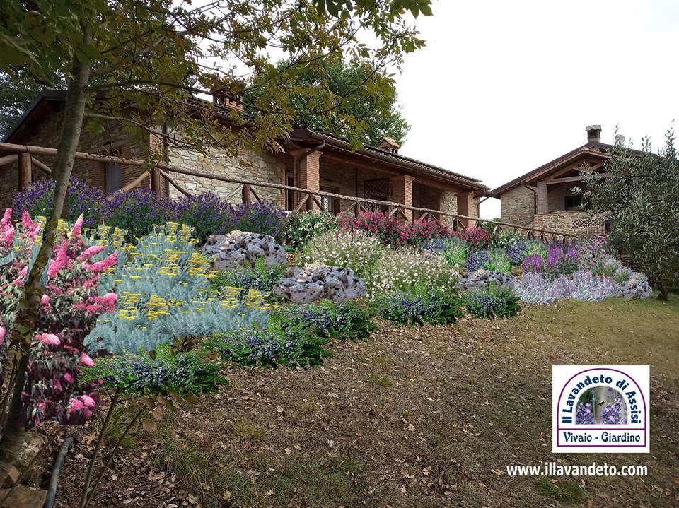Progetti Giardini Online Idee Per Aiuole Con Lavanda