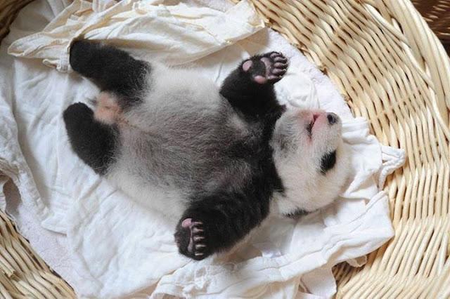 Children panda #10