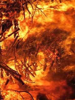 ΕΛ.Γ.Α : Πρόγραμμα Κρατικών Οικονομικών Ενισχύσεων «Πυρκαγιές 2014, 2015 και 2016»