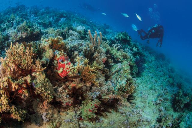 As áreas de maior biodiversidade marinha do Atlântico Sul são tema do II Encontro Regional do Plano de Ação Nacional para a Conservação dos Ambientes Coralíneos (PAN Corais), na Praia do Forte (BA). Ele acaba de ocorrer, nos dias 9 e 10 de outubro, quando representantes de ações, projetos e instituições da Bahia e do Espírito Santo apresentaram e discutiram o que estão realizando para a conservação e sustentabilidade socioambiental desses ambientes.