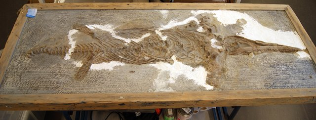 Ichthyosaur dinosaur framed with bright white filled in areas.