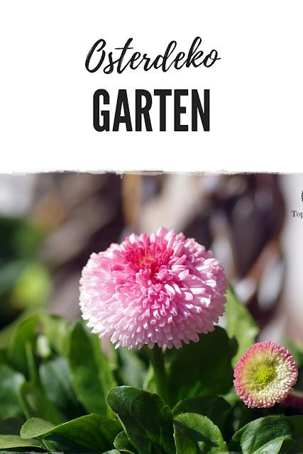 natürliche Osterdeko mit Blumen für den Garten: Gartenblog Topfgartenwelt #osterdeko #bellis #hornveilchen #osterhase #blumendeko #haus #terrasse #frühling