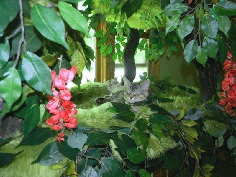 Incredible Cat Trees