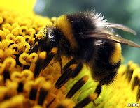 bees and biodiversity