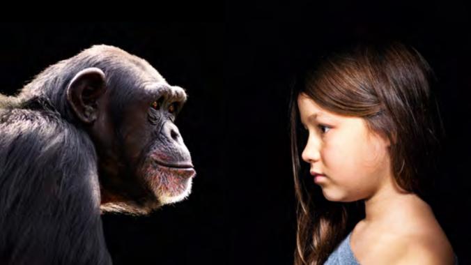 El gran cerebro de los primates se debe más a la dieta que a su sociabilidad