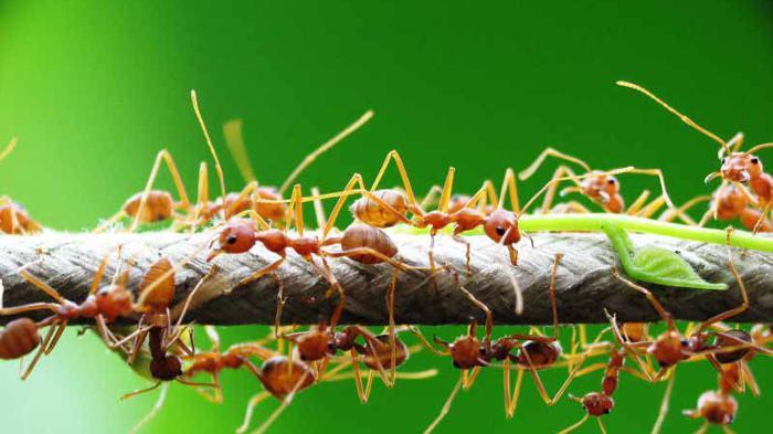 Sisi Lain Dunia Semut: Ternyata, di Dunia Semut Ada Perbudakan