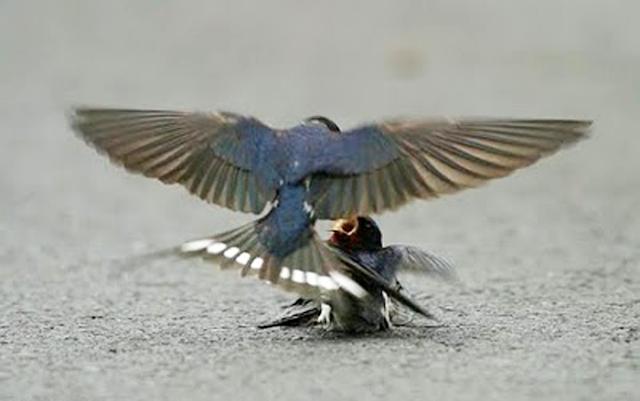 Kisah cinta 2 ekor burung