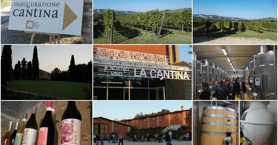 Una Cantina bio consapevole dai terreni al calice - Tenuta dei Santi Giacomo e Filippo a Urbino