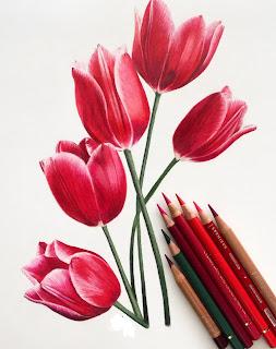 Cara Membuat Sketsa Bunga Menggunakan Pensil Warna