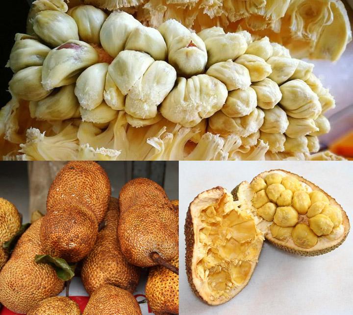 Tips cara nak pilih buah cempedak masak isi tebal dan banyak